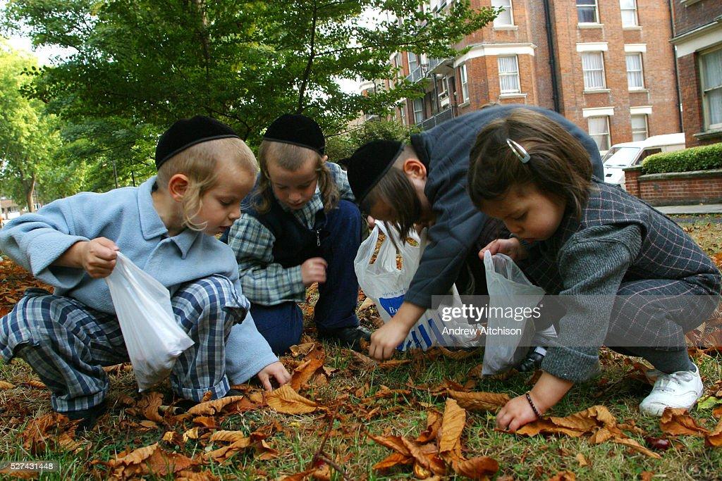 UK - London - Stamford Hill Orthodox Jewish Community - Children collecting conkers : News Photo