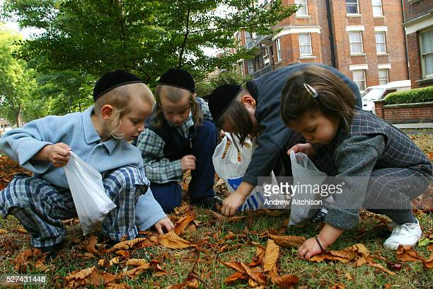 In a communal garden of a Stamford Hill block of flats 3 young Orthodox Jewish boys and one Orthodox Jewish girl collect conkers from the ground and...