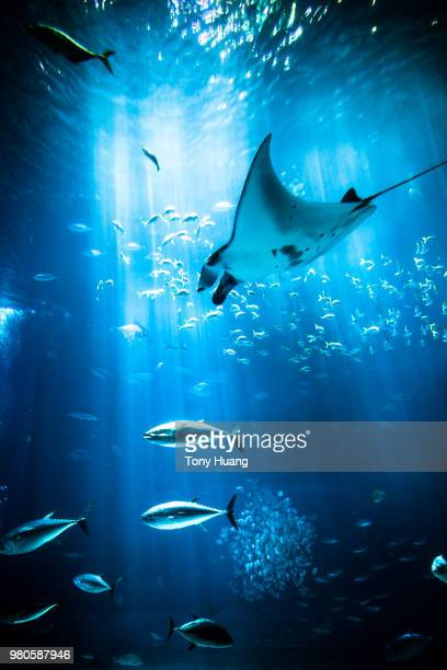in a dream world - undersea stock pictures, royalty-free photos & images