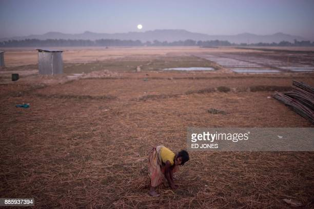 TOPSHOT In a photo taken on December 3 2017 a Rohingya girl gathers dried rice stalks in a field near the Naybara refugee camp in Cox's Bazar...