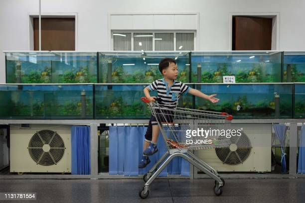 TOPSHOT In a photo taken on June 4 2017 a boy sits in a trolley before seafood tanks at the Kwangbok department store supermarket in Pyongyang The...