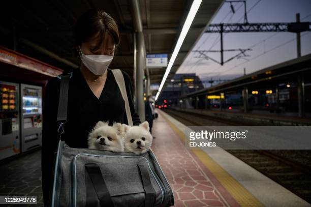 In a photo taken on October 7, 2020 a woman holds two dogs as she waits for a train in Suncheon.