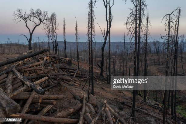 In an aerial view, a barren landscape is seen after burned trees were cut down following the Creek Fire, which began on September 4, 2020 and was...
