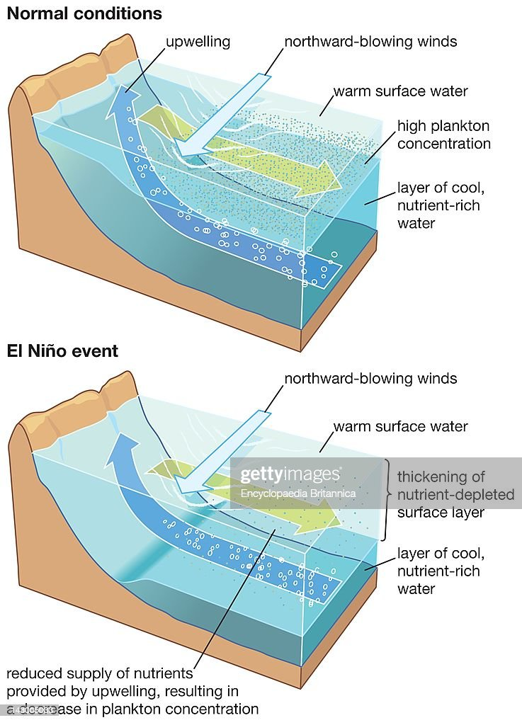 In An El Nino Event, The Upper Water Layer Thickens And Upwelled ...