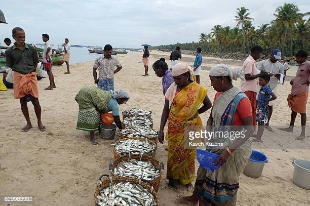 In Chethy fishing harbor Indian women in Saree look at the fresh catch in baskets laid for customers on the beach front on October 13 2016 in...