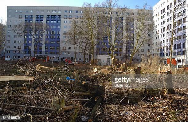 In der Schmidstrasse in Mitte sind auf einer grossen Freiflaeche mitca 40jaehrigem Baumbestand zwischen den Plattenbauten an derHeinrichHeineStrasse...