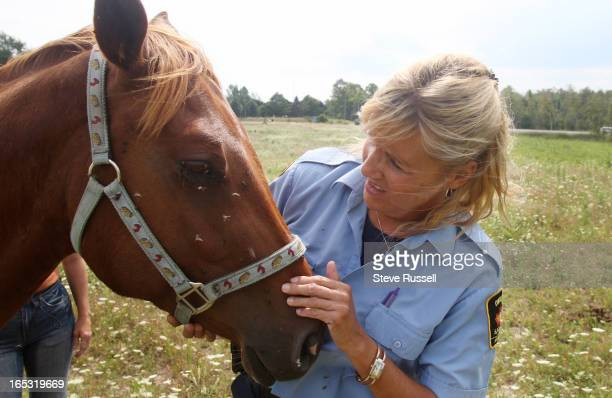 HUMANE in DURHAM08/16/07Near Beaverton Debby Houghton examines other horces in a fiels after visiting a mare and her fowl The mare while pregnant...