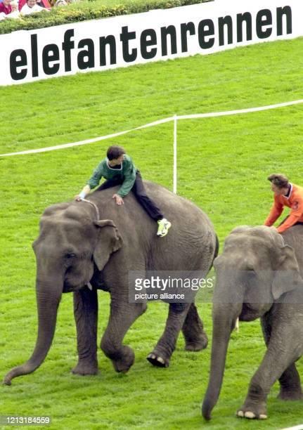 In einem knappen Finish setzt sich am 16.7.2000 die indische Elefantenkuh Conny auf der Rennbahn Berlin-Hoppegarten gegen Mara durch. Das...