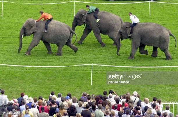 In einem knappen Finish setzt sich am16.7.2000 die indische Elefantenkuh Conny beim Elefantenrennen auf der Rennbahn Berlin-Hoppegarten gegen Indra...