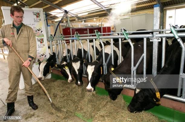 In einem zur Messe EuroTier '98 eingerichteten Milchviehstall bereitet der Agraringenieur Jürgen Steen am 9 November 1998 in Hannover die Fütterung...