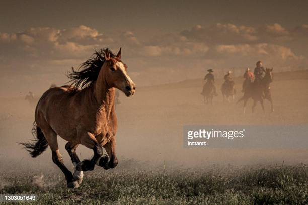 in foreground, view of a horse bending its knees and in background, seven cowboys and cowgirls supervising the run of the horses. - american culture stock pictures, royalty-free photos & images
