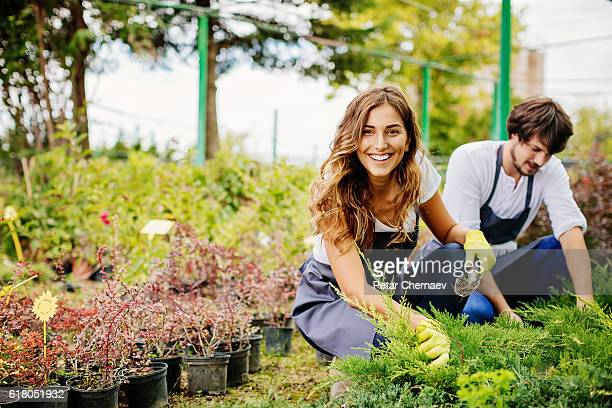 in gardening business - tuinieren stockfoto's en -beelden