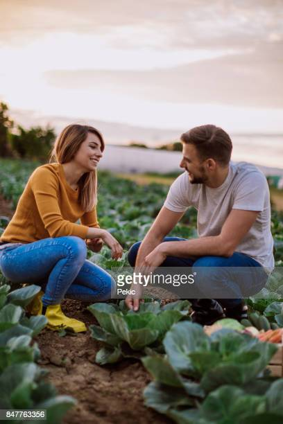 in gardening business - cabbage family stock photos and pictures