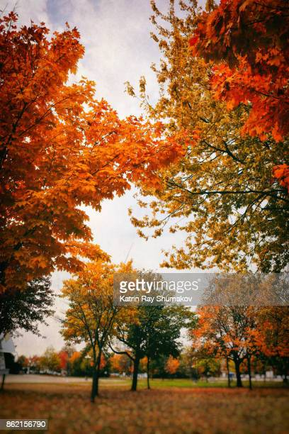 In Glowing Colours of Autumn