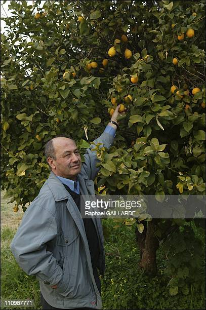 In his former orchard in Dikomo in the zone occupied by Turks since their 1974 invasion Yiannis Hadjiloucas feels again the sensations from his youth...