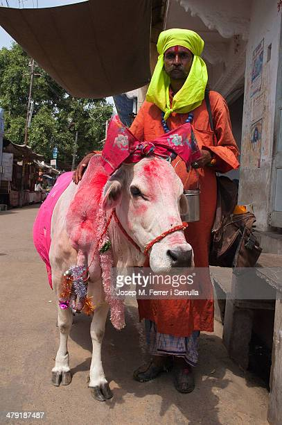CONTENT] In India cows are sacred all but those who have a genetic strain or special peculiarity receive treatment even more important Are used as...