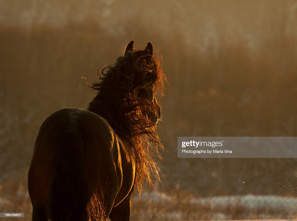 In late sunset : Stock Photo