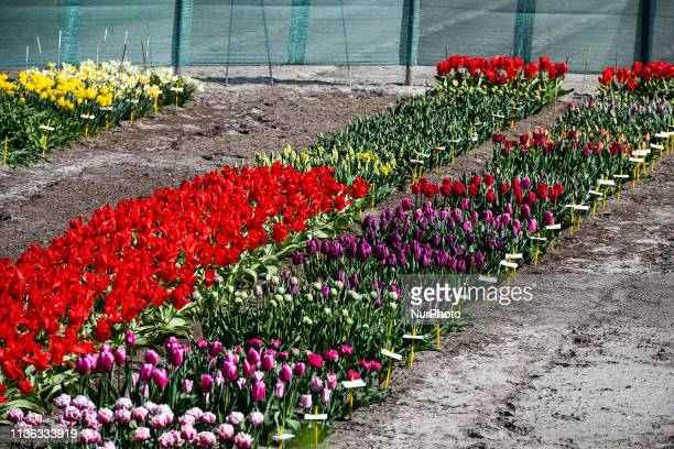 In Lisse, in The Netherlands, you can find Keukenhof, one of the world's largest flower gardens, established in 1949 and covering an area of 32...