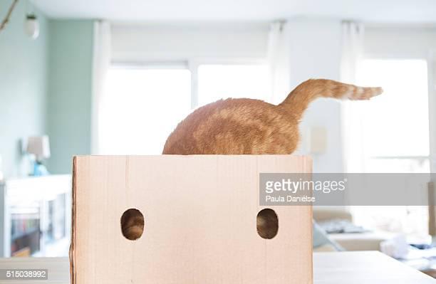 In my cardboard castle