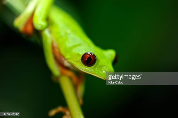 In recent years, conservation biologists have drawn our attention to a worldwide decline in wild populations of frogs, toads, and salamanders - a...