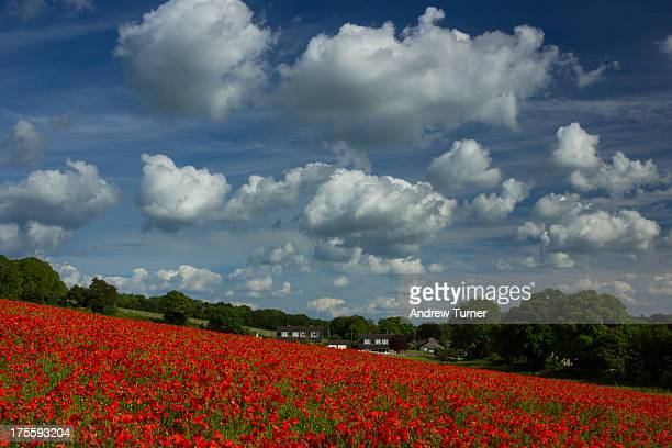 CONTENT] In remembrance a poppy field captured in Berkshire earlier this year The folk in those houses must have had one heck of a view for a few...