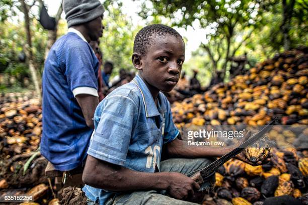 In small secluded farming commune near Abengourou a young boy perhaps 10 years old sits among a group of men in a tight circle around a mound of...