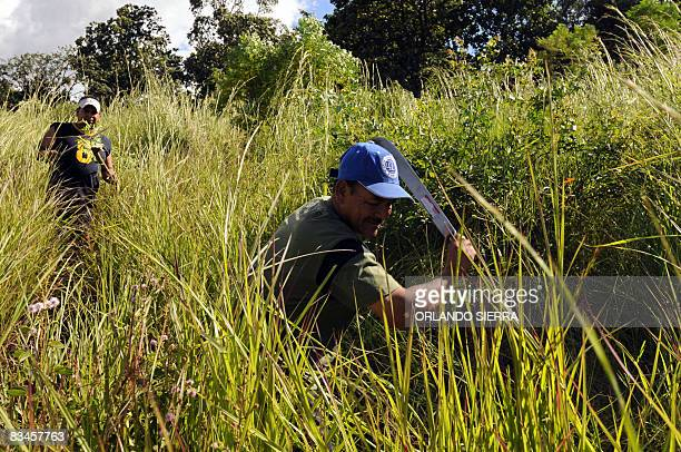 In Spanish by Noe Leiva Honduran builder Pedro Funez, uses a machete to clear the grass grown over the graves of his family at the cemetery for the...