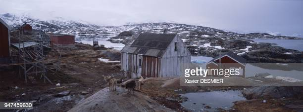 In summer the village of Tiniteqilaaq One of the six villages comprising the district of Ammassalik lies on the edge of Sermilik Fjord about fifty...