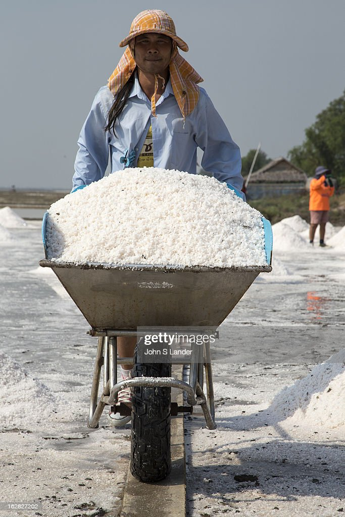In Thailand, most of the salt used comes from brine salt farms, and the largest number of these brine salt farms are close to Bangkok in Samut Sakhorn. These large watery fields resemble rice paddis – except for the obvious absence of rice. To make the salt, the fields are flooded with sea water pumped in from the nearby Gulf of Thailand, dammed, and left to dry naturally in the sun. When the water has evaporated, the salt is piled and taken away to be cleaned and bagged for sale. Along Highway 35 there are plenty of vendors along the roadside selling huge bags of salt. It takes about one month for the water to evaporate and create salt. .