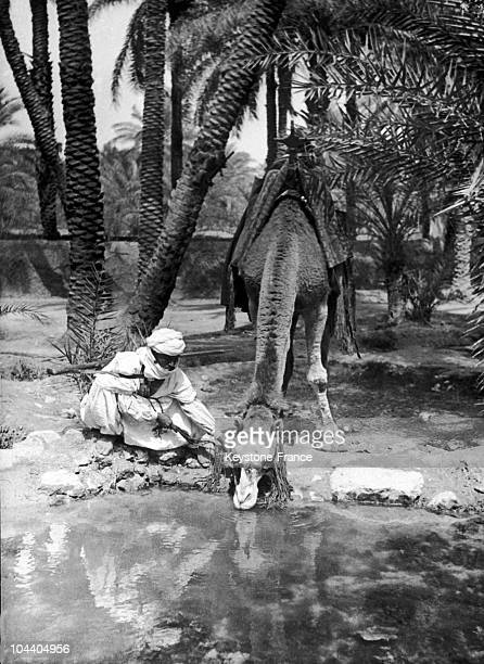 In the 1930's a Meharist lets his camel drink from a pond of an Algerian oasis