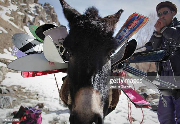 In the absence of chairlifts and roads, local ski guides in Afghanistan's Hindu Kush mountains use donkeys to help carry skis and poles above the...