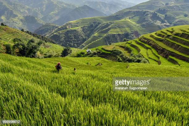 In the arms of rice terraces