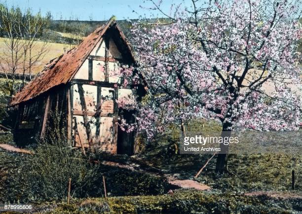 In the beautiful south of our fatherland the beautiful Black Forest the spring has returned Since we want to start our journey through the beauty of...