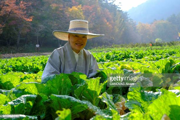 in the buddhist temple of Bulyeongsa in South Korea the recipes of Nun Simjeon Ilwoon Sunim that inspired chefs from all over the world This vegan...