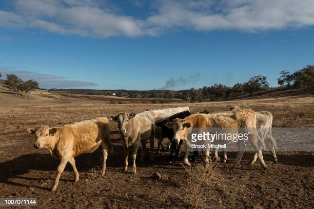 In the Central Western region of New South Wales Australia farmers continue to battle a crippling drought which many locals are calling the worst...