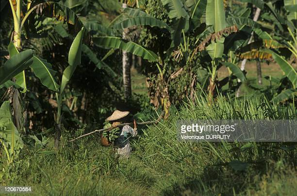 In the countryside in Nias island Indonesia Nias is an island off the western coast of Sumatra