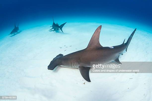 in the depths of the sea - south bimini stock photos and pictures