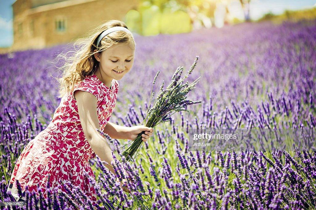 In the field of lavender : Bildbanksbilder