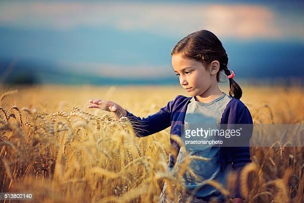 Dans le champ de blé