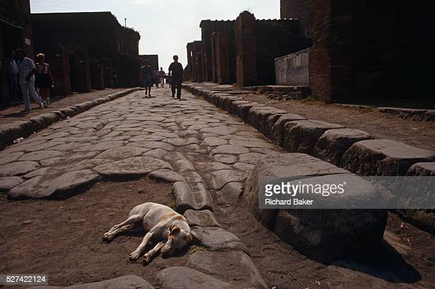 In the foreground a local dog lies down in the afternoon heat on rutted ancient Roman flag stones while in the background tourists walk down the old...