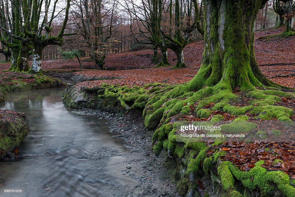 In the forest : Foto stock