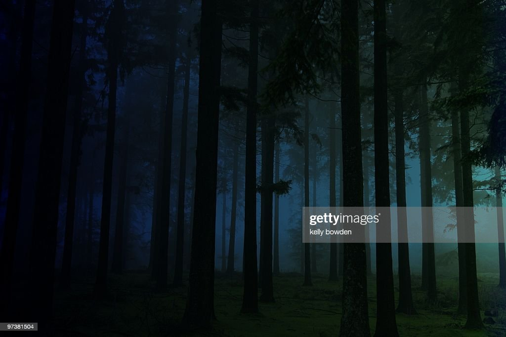 In the forest : Stock Photo