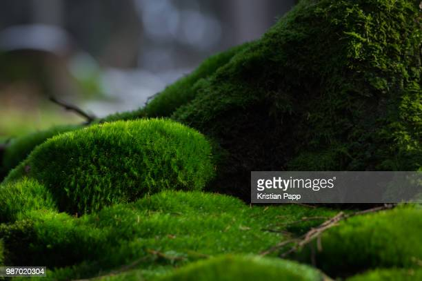 in the forest - moss stock pictures, royalty-free photos & images