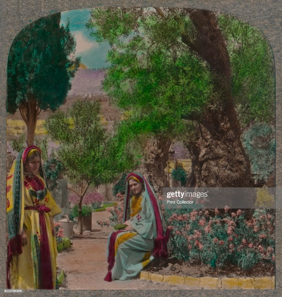 In The Garden Of Gethsemaneu0027 C1900 From Journey In All Lands Palestine  [Realistic Travels