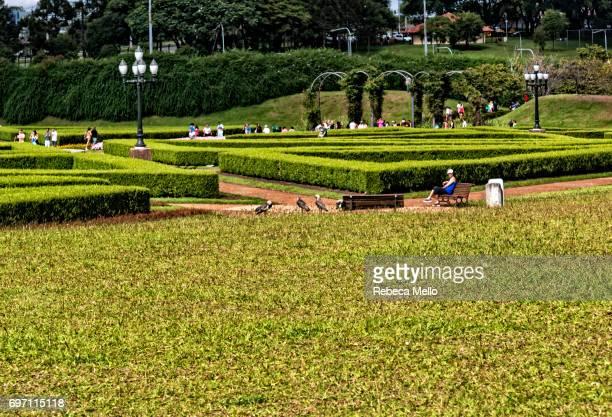 in the gardens in botanical garden, curitiba - curitiba stock pictures, royalty-free photos & images