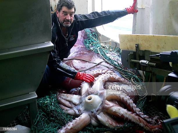 In the handout photo provided by the New Zealand Ministry of Fisheries Captain John Bennett examines the world's first intact adult male colossal...