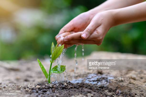 in the hands of trees growing seedlings. bokeh green background female hand holding tree on nature field grass forest conservation concept - tree farm stock pictures, royalty-free photos & images