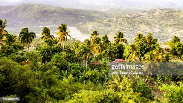 In the Hills Above Jacmel