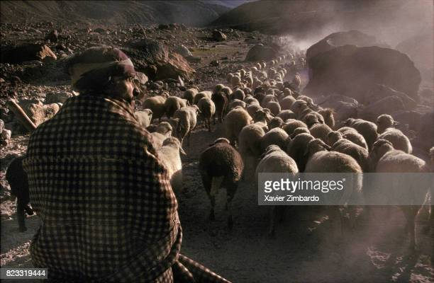In the Himalayas mountains , a shepherd leading his sheep flock is leaving the moonlike landscapes of Spiti by Kunzam Pass on September 30, 1993 in...
