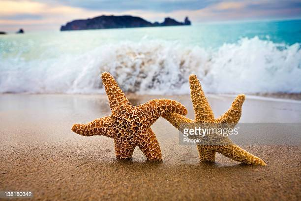 In the Mood for Love -  Couple of Starfish